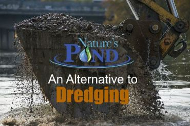 Nature's Pond Care – An Alternative to Dredging